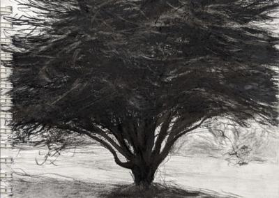 "Daniele Erville, ""Tree As Self Portrait: Wild & Free-Willed!"" – $575"