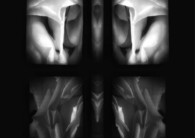 "Stonefox, ""Rows Of Meditation"" Photograph 8x10 $50"