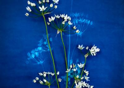 "Bob Hemstock, ""Floral Positive-Negative"" Photography and Cyanotype 12x10 $125"