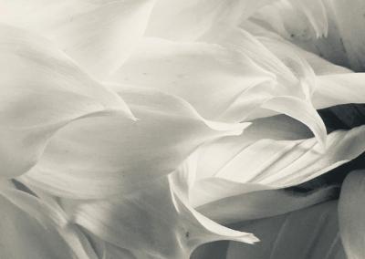 "Jackie La Lanne, ""Ushering"" Digital Photograph 12x12 $75"