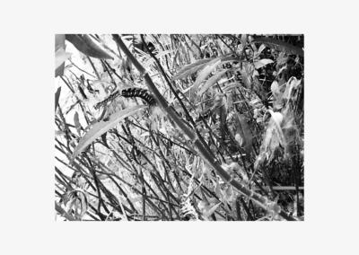 """Julie McGuinness, """"Lumberyard"""" Photograph 5x7 NFS"""