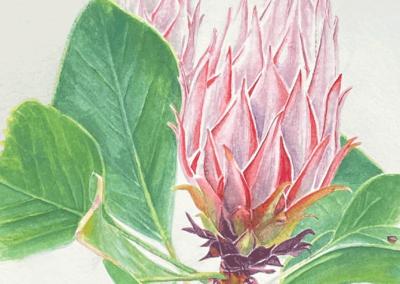 """Karen Romani, """"New Beginning"""" Watercolor on Paper 12x8 $400"""