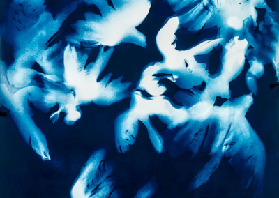 """Kelly McKaig """"Flight"""" cyanotype, 30x20 $1400"""